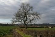 Willand: towards Gerston Farm