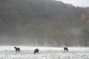 Oakford: horses grazing in the Exe valley