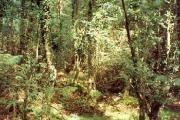 Wet Woodland at the  Greenwood Centre, Llanddeiniolen
