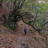 Offa's Dyke Path passing through woodland above Bigsweir