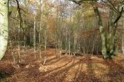 Rickmansworth: Bishop's Wood Country Park