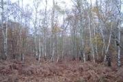 Rickmansworth: Bishop's Wood Country Park