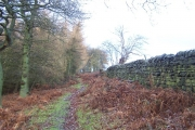 Woods in Dallowgill