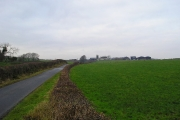Roadside Hedge
