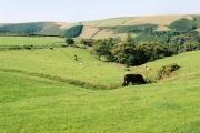 Oare: field with carriage gutters