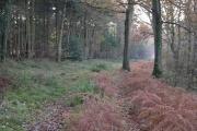 Botley Woods