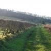 Track to Borrowscale Wood