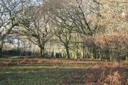 Woodland on the edge of Roborough Down