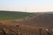 Bampton: above South Hayne Farm