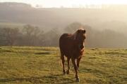 Bampton: near Dowhills Farm