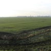 Timberland Dales