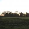 Lancashire plain trees