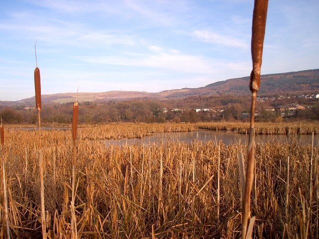 Wetland Nature Reserve in winter