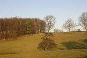 Farmland at Wycliffe Hall, near Barnard Castle