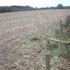 Farmland, Godwinscroft, Hampshire