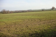Winter wheat with tractor wheelings