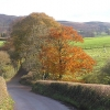 Autumn colours on Heddon Oak lane, looking to Quantocks