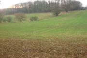 Barnacks Hill Wood