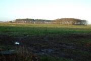 Searchlight  Plantation