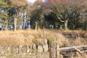 Tutehill Wood Middle Boundary.