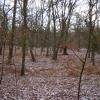 Woodland near Charleshill
