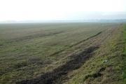 Grass View