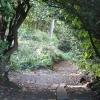 Donibristle Wood
