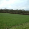 Looking South East to Wilster Copse
