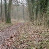 The Cotswold Way in Buckholt Wood