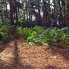 Southill Park Woods, Bedfordshire