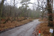 Woodland Track near Crooksbury Common