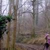 Thick Wood,  near Edgeworth