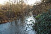 River Crane