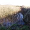Source of Penberth River (?)