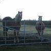 Paddock near Milwr Road