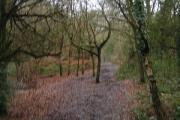 Redhill Common