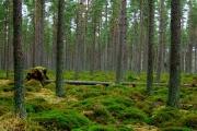 Coldwells Wood