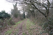 Small wood near the River Roding