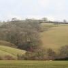 Cadbury: woodland south of the church
