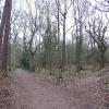 Eccleshall Woods.