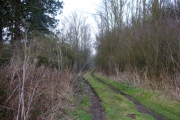 Woodland in Winter
