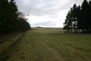 Farmland Between Plantations