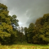 Beech Trees at Dunham Park