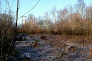 Coppiced area in Starvelarks Wood