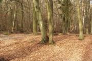 Cowcroft Woods