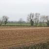 Maize stubble near Syston