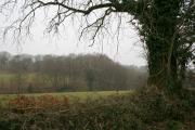 Hemyock: Lickham Bottom