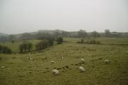 Farmland High Brow Edge
