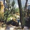 Cactus House, Winter Gardens, Duthie Park.