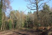 Commercial woodland near Woodbury
